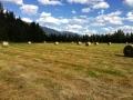 making-hay